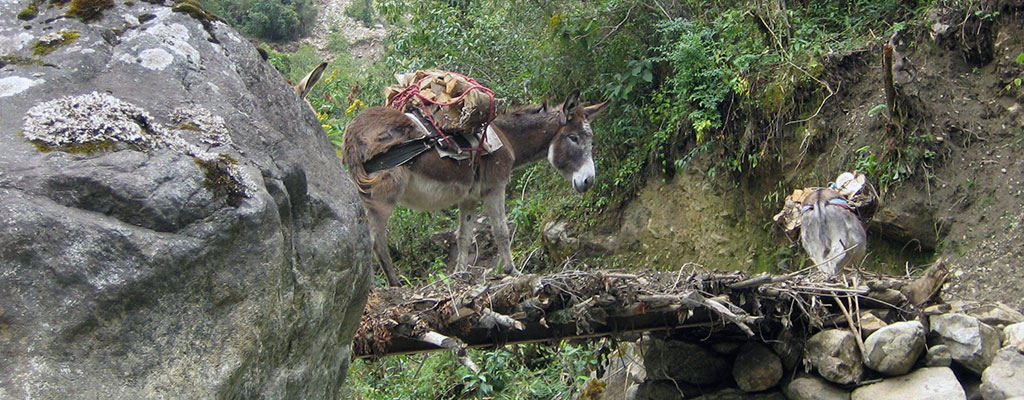 A Donkey Standing On A Bridge Made Of Branches